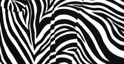 Zebra Love by Blake Emory