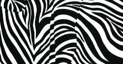 Zebra Love by Blake Emory