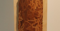 Pine Bark Beetle Trails in wood by Virginia Stearns