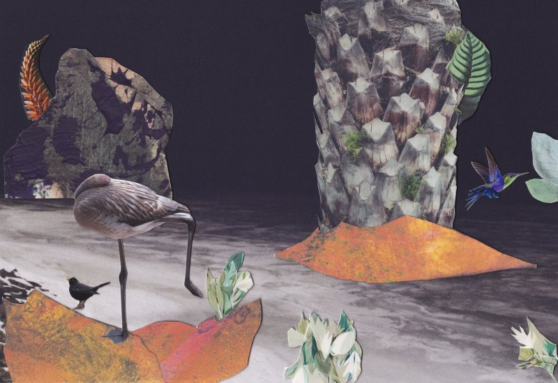 Giovanna Petrocchi, Birds Are Artists Too, 2015